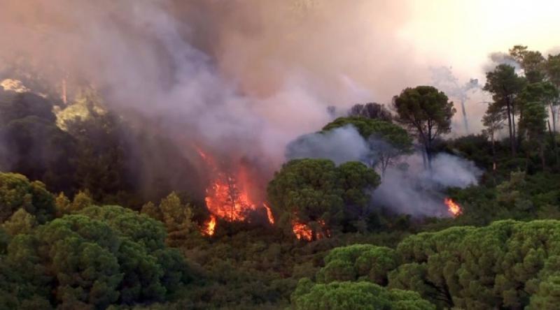 İstanbul Valiliği: 'Maltepe'deki orman yangını kontrol altına alındı'