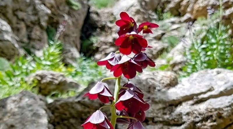 Bu çiçeği koparana 62 bin lira ceza