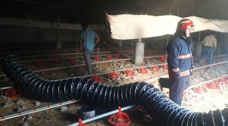 Tavuk çiftliği alevlere teslim oldu, 12 bin civciv öldü