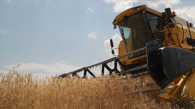 TMO 500 bin ton buğday ithal edecek