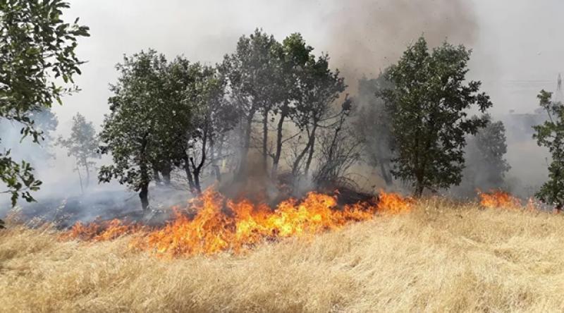Diyarbakır'da yangın; 300 dönümlük alan kül oldu