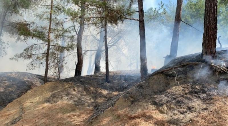 Adana'da bir orman yangını daha