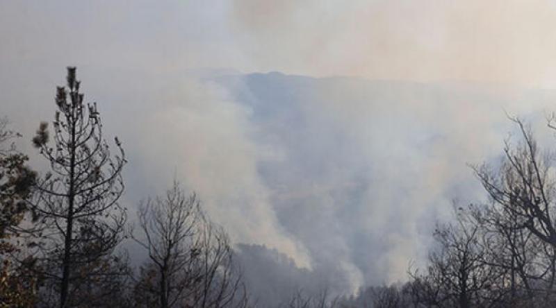Zonguldak'ta orman yangını! 100 dönümlük alan etkilendi