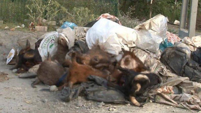 'Kurbanlık hayvanların kelleleri kepçe ile getirilerek yola atıldı'