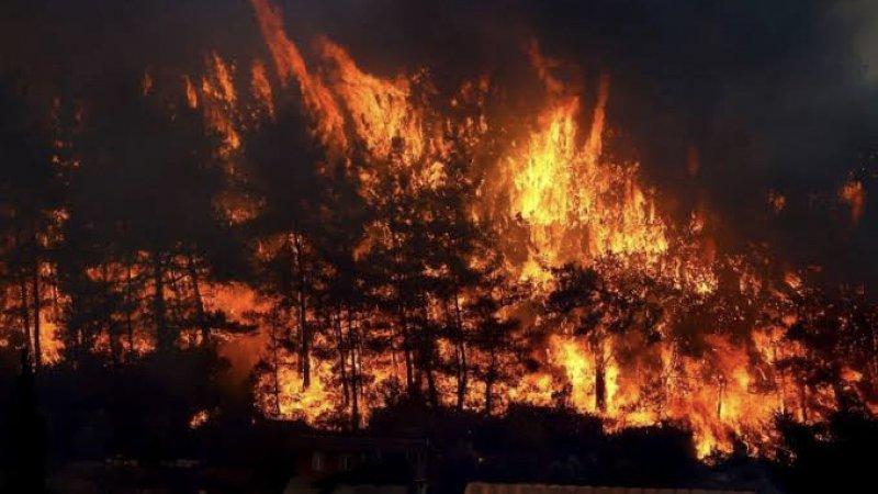 Manavgat yangınının bilançosu: 7 insan, on binlerce hayvan ve 60 bin hektar orman kaybedildi
