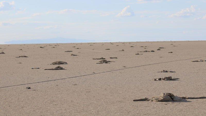 Flamingo ölümleri Meclis gündeminde: Havzalardaki kuraklık, hatalı tarım politikalarından mı kaynaklanıyor?