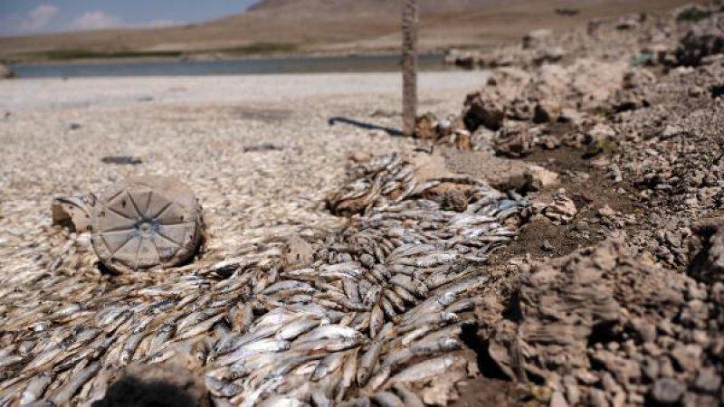 May Barajı'nda su çekildi, binlerce balık öldü