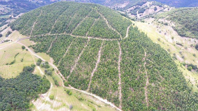 Çankırı ve Kastamonu'da vatandaşların ormanlık alanlara girişi yasaklandı