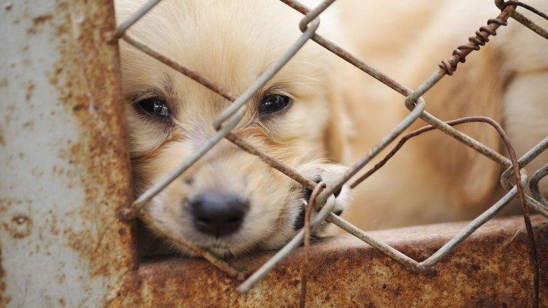 Belçika'da hayvan öldürenler 10 yıla kadar hapis ve 1,6 milyon Euro para cezasına çarptırılabilecek