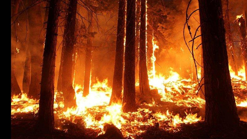 Cumhurbaşkanlığı İletişim Başkanlığı, yangın bölgelerindeki mücadelenin 5 günlük bilançosunu açıkladı