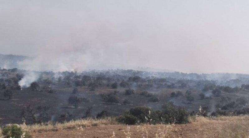 KKTC'de de orman yangını: Ekipler seferber oldu