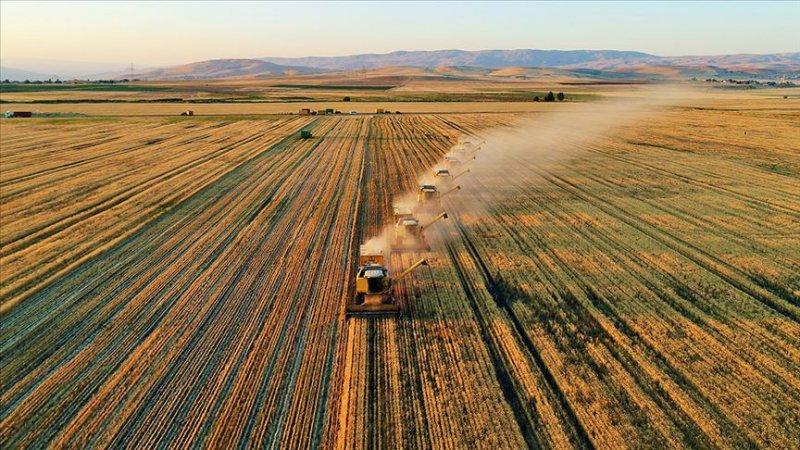 Pandemi istihdamda en çok tarımı vurdu; kayıtlı çiftçi sayısı yüzde 5.1 azaldı