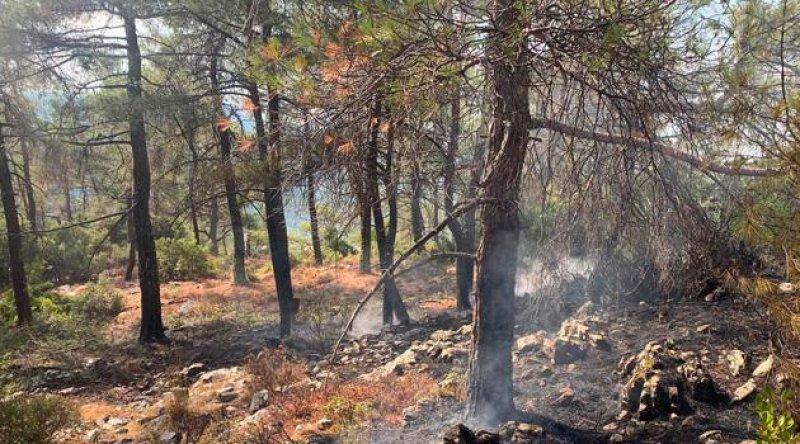 Muğla'da 13 noktada orman yangını
