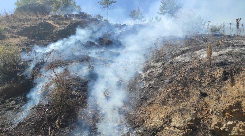 Mersin'de korkutan orman yangını