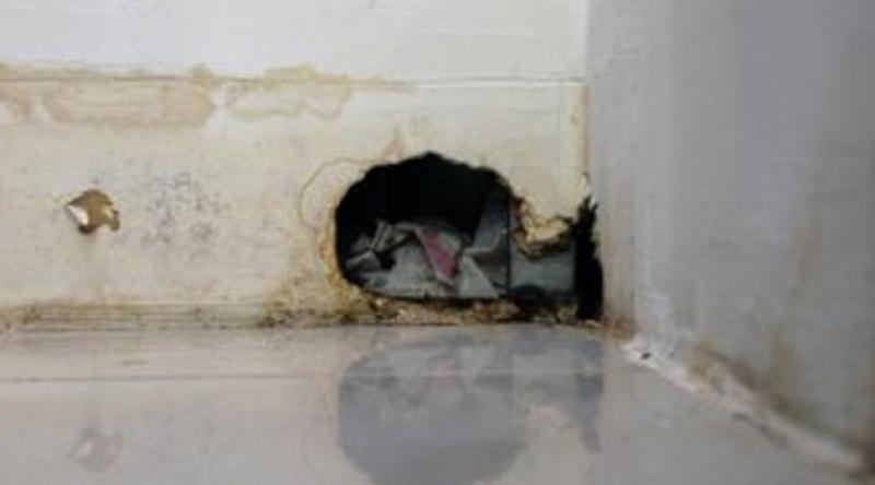 Avrupa'da sığınmacılar fare ve böcekli evlere yerleştiriliyor