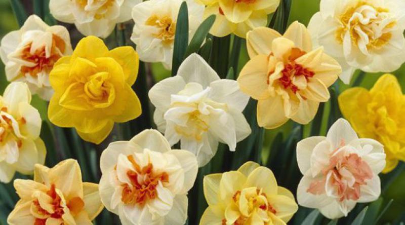 Peygamberimizin Bazı Bitkiler Hakkında Tavsiyeleri